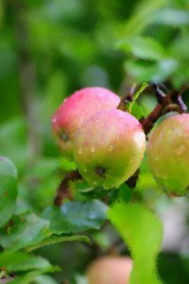 11.9.14.リンゴs.jpg