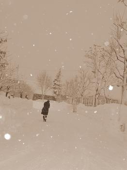 12.1.23.朝の雪6s.jpg