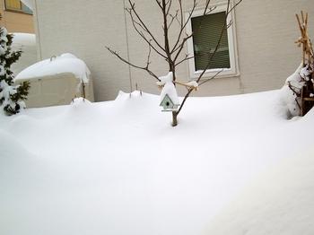 12.1.25.雪s.jpg