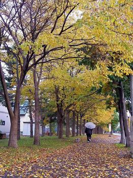 12.10.31.散歩道.JPG