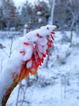 .トリトマに雪.JPG