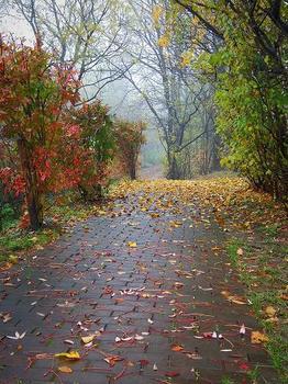 12.11.8.朝靄の散歩道.JPG
