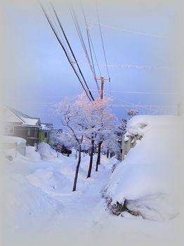 12.2.18.樹氷の朝11s.jpg