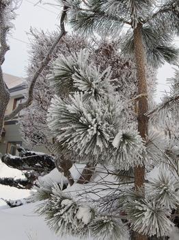 12.2.18.樹氷の朝18s.jpg