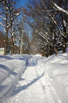 13.1.17.雪の日1●.JPG