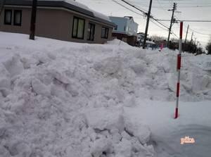 15.1.27.排雪日2.jpg