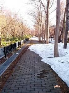 15.4.10.雪解け初散歩道.jpg